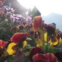 VideoTwo